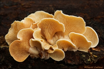 Mushroom_9262-12