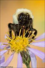Bumble_Bee_1562-17
