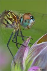 Dragonfly_6610-13