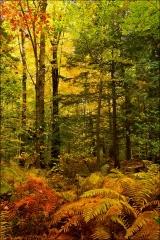 Dewberry_Trail_Autumn_7129-12