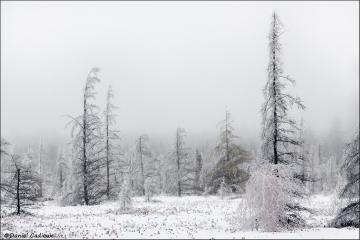 Ice_storm_2539-09
