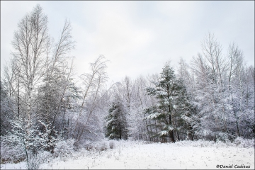 Mer_Bleue_Winter_2474-12