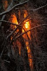 PI_Forest_Sunrise_0193-13