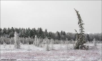 Winter_Mer_Bleue_2188-15