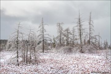 Winter_Mer_Bleue_2214-15