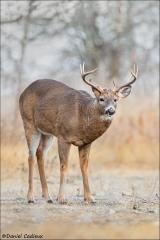 Whitetail-Deer_1445-19