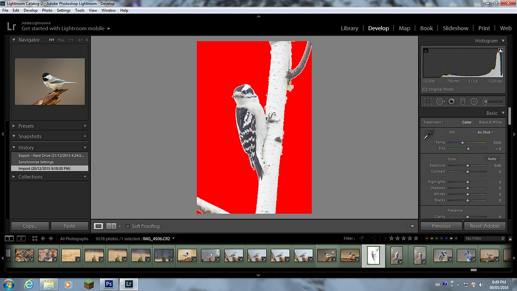Downy Woodpecker raw screen capture