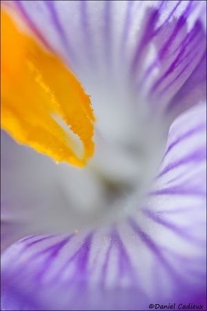 tn_Crocus_0837-1.jpg