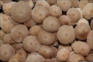 Mushrooms_6641-12