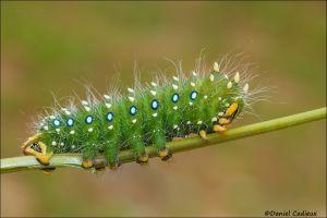 Caterpillar_7150-15