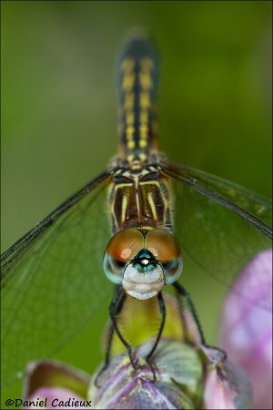 Dragonfly_6619-13