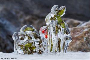 Ice Rabbit_0441-13
