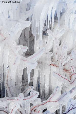 Ice_8279-16