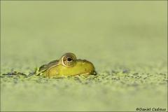 Bullfrog_5694-16