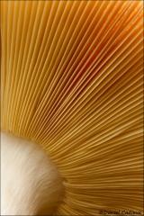 Mushroom_2733-10