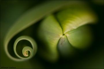Tulip_1444-12