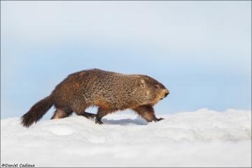 Groundhog_1988-18