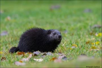 Groundhog_4881-15