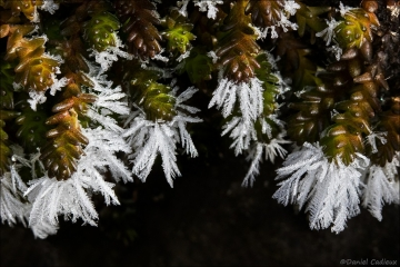 Ice frost_0474-18