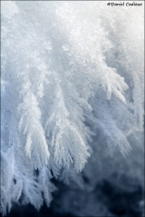 Snow_feathers_9940-12