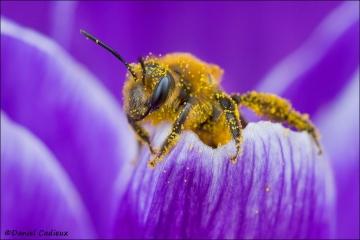 Bee_1581-12