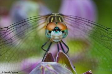 Dragonfly_6613-13