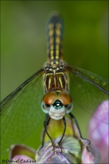Dragonfly_6619-13