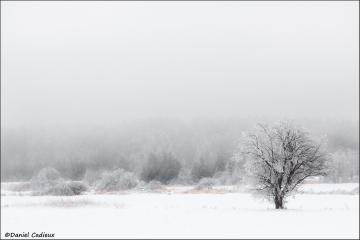 Ice_storm_2489-09