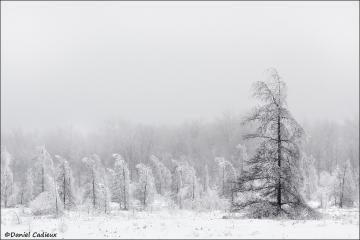 Ice_storm_2563-09