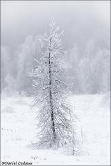 Ice_storm_2568-09