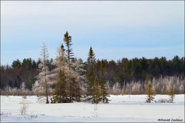 Mer_Bleue_Bog_winter_0217-12