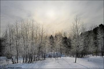 Mer_Bleue_Winter_0197-12