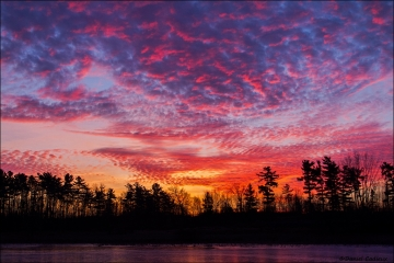 Sunrise_Petrie_Island_3920-15