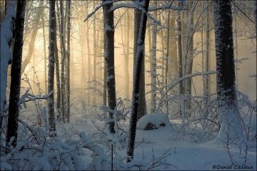 Winter_Light_rays2_1182-06