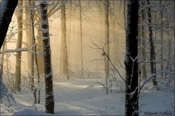 Winter_Light_rays_1184-06
