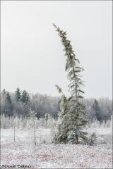 Winter_Mer_Bleue_2184-15