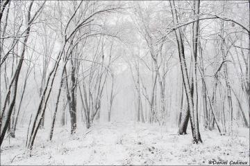 Winter_Petrie_Island_2535-16
