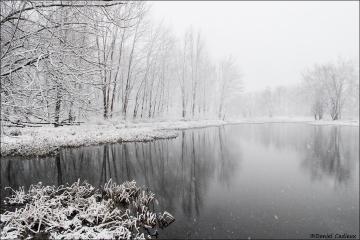 Winter_Petrie_Island_2616-16