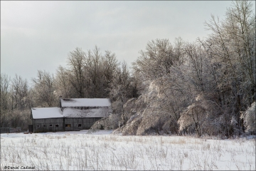 Winter_Renaud_Rd_1883-15