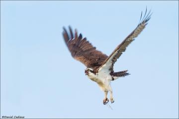 Osprey_5181-15